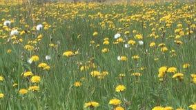 Hierba de la primavera. almacen de video