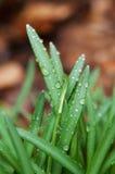 Hierba de la primavera Imagen de archivo libre de regalías