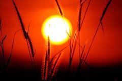 Hierba de la puesta del sol Foto de archivo libre de regalías