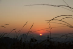 Hierba de la puesta del sol en campo de la puesta del sol Foto de archivo