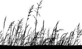 Hierba de la silueta Imágenes de archivo libres de regalías