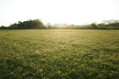 Hierba de la sol foto de archivo libre de regalías