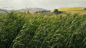 Hierba de la zanja movida por el viento metrajes