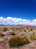 Hierba de las montañas del cielo azul de la mucha altitud de Bolivia del paisaje Foto de archivo libre de regalías