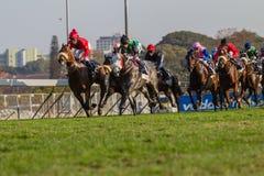 Hierba de los jinetes de la carrera de caballos Imágenes de archivo libres de regalías