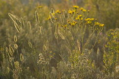 Hierba de los Wildflowers Fotografía de archivo