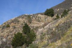 Hierba de pampa invasor en Big Sur California Fotos de archivo libres de regalías