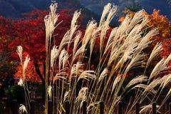Hierba de plata y jardín japonés, Kyoto Japón Fotografía de archivo