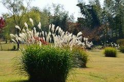 Hierba de plata y jardín japonés, Kyoto Japón Fotos de archivo