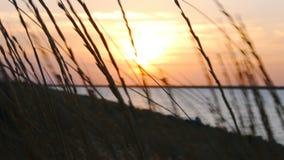 Hierba de pradera alta silueteada contra una puesta del sol colorida almacen de video