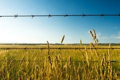 Hierba de pradera y alambre de púas secos imagenes de archivo
