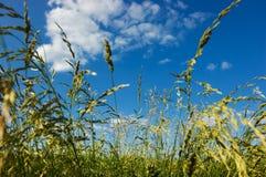 Hierba de prado Imagen de archivo libre de regalías