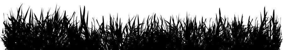 Hierba de prado ilustración del vector