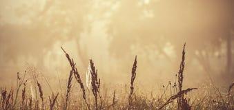 Hierba de prado contra la perspectiva de árboles en la niebla Primavera Imagen de archivo libre de regalías