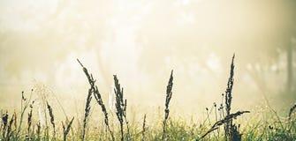 Hierba de prado contra la perspectiva de árboles en la niebla Primavera Fotos de archivo libres de regalías