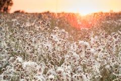Hierba de prado en la puesta del sol Fotografía de archivo libre de regalías