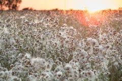 Hierba de prado en la puesta del sol Imagen de archivo libre de regalías
