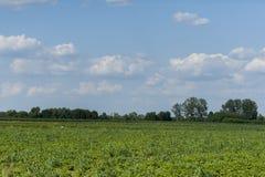 Hierba de prado, threes que un cielo azul se nubla Foto de archivo