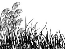 Hierba de prado, vector Foto de archivo