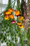 Hierba de sequía y flores Foto de archivo libre de regalías