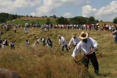 Hierba de siega en el prado de la montaña con las guadañas Fotos de archivo libres de regalías