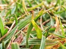 hierba de tierra del juego Foto de archivo