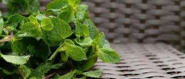 Hierba de verde menta jugosa del ingrediente en fondo de mimbre Imagenes de archivo