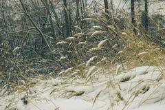 Hierba debajo de la primera nieve foto de archivo