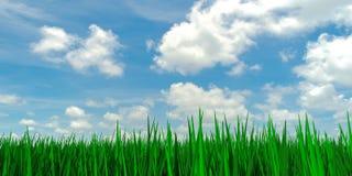 Hierba debajo del cielo azul Foto de archivo libre de regalías