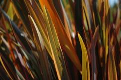 Hierba decorativa retroiluminada del otoño Foto de archivo
