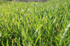Hierba del ² а/Green del 'раРdel  Ñ del ½ Ð°Ñ de Ð?Ð de Ð-Ð?Д Imagenes de archivo