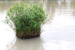 Hierba del agua en el lago Foto de archivo libre de regalías