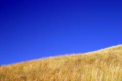 Hierba del amarillo del cielo azul imagen de archivo