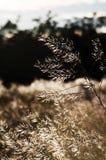 Hierba del campo Fotografía de archivo libre de regalías