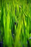 Hierba del campo con el pequeño insecto Imagen de archivo libre de regalías