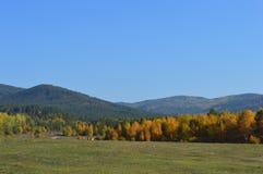 Hierba del campo de los árboles de las montañas de la naturaleza Fotografía de archivo