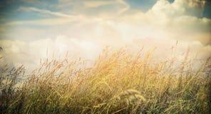 Hierba del campo del verano o del otoño en el fondo hermoso del cielo, bandera