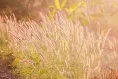Hierba del campo en Sunner Imagen de archivo