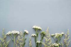 Hierba del campo del verano y frontera de los wildflowers en fondo gris Imágenes de archivo libres de regalías