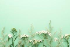 Hierba del campo del verano y frontera de los wildflowers en fondo verde Imagenes de archivo