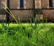 Hierba del cementerio Fotografía de archivo libre de regalías