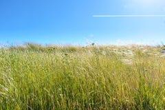 Hierba del comienzo del verano debajo del cielo azul Imagen de archivo