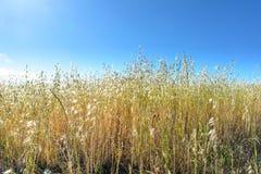 Hierba del comienzo del verano debajo del cielo azul Imagenes de archivo