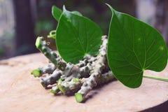 Hierba del cordifolia de Tinospora Foto de archivo libre de regalías