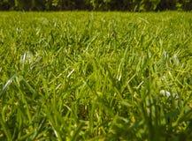 Hierba del corte del verde en primavera imágenes de archivo libres de regalías