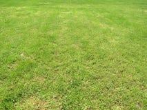 Hierba del corte del verde en primavera Fondo de la hierba verde del f?tbol o del campo de f?tbol imágenes de archivo libres de regalías