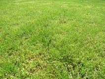 Hierba del corte del verde en primavera Fondo de la hierba verde del f?tbol o del campo de f?tbol fotos de archivo libres de regalías