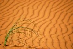 Hierba del desierto Fotos de archivo