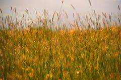 Hierba del fondo de la hierba, fresca y natural imagenes de archivo