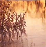 Hierba del hielo en el río congelado Imágenes de archivo libres de regalías